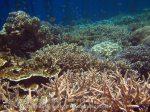372_Kri-8b_Corals_20141027_IMG_1891.jpg