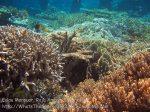 373_Kri-8b_Corals_20141027_IMG_1894.jpg