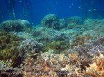375_Kri-8c_Corals_20141023_IMG_1163.jpg