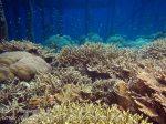 376_Kri-8c_Corals_20141027_IMG_1955.jpg