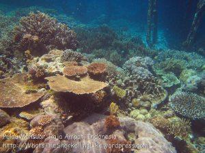 384_Kri-8c_Corals_20141027_IMG_1946.jpg