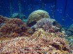 385_Kri-8c_Corals_20141027_IMG_1952.jpg