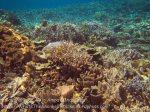 387_Kri-8c_Corals_20141027_IMG_1938.jpg