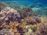 388_Kri-8c_Corals_20141027_IMG_1944.jpg