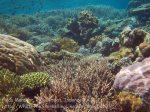389_Kri-8c_Corals_20141027_IMG_1945.jpg