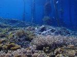 406_Kri-Sawandakek_Corals_20141019_PA190019.jpg