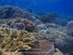 407_Kri-Sawandakek_Corals_20141019_PA190052.jpg