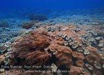 409_Kri-Sawandakek_Corals_20141019_PA190062.jpg
