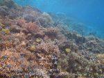 431_Arborek-A2_Corals_20141022_IMG_0602.jpg