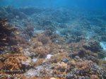 432_Arborek-A2_Corals_20141022_IMG_0601.jpg