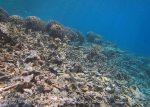 433_Arborek-A2_Corals_20141022_IMG_0603.jpg