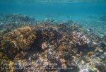 436_Arborek-A3_Corals_20141022_IMG_0582.jpg