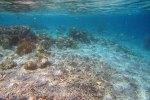 437_Arborek-A3_Corals_20141022_IMG_0579.jpg