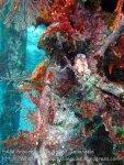 449_Arborek-A4_Leopard-Chromodoris-Nudibranch_20141022_IMG_0575.jpg