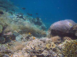 458_Gam-G1_Corals_20141029_IMG_2155.jpg