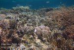 459_Gam-G1_Corals_20141029_IMG_2121.jpg