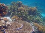 462_Gam-G1_Corals_20141029_IMG_2135.jpg