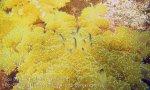 466_Gam-G2_Upsidedown-Jellyfish_20141101_IMG_3288.jpg