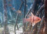 471_Gam-G2_Orbicular-Cardinalfish_20141101_IMG_3369_.jpg