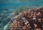 478_Gam-G3b_Corals_20141028_IMG_1983.jpg