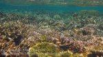 481_Gam-G3b_Corals_20141028_IMG_2003.jpg
