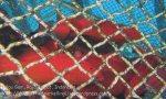 492_Gam-G3_Coral-Grouper-AKA-Hind_20141028_IMG_2021.jpg