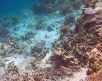 497_Gam-G3e_Coral_n-Pearly-Monocle-Bream_20141028_IMG_2043.jpg