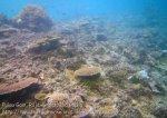 501_Gam-G4_Corals_20141029_IMG_2389.jpg