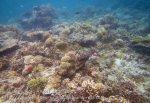 502_Gam-G4_Corals_20141029_IMG_2388.jpg