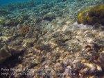 507_Gam-G5_Corals_20141028_IMG_2083.jpg