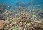 514_Gam-G6_Corals_20141029_IMG_2361.jpg