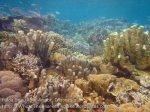 518_Gam-G6_Corals_20141029_IMG_2344.jpg