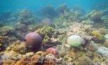 522_Gam-G7_Corals_20141029_IMG_2341.jpg