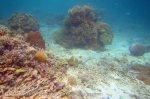 524_Gam-G7_Corals_20141029_IMG_2340.jpg