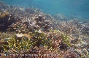 527_Gam-G8_Corals_20141029_IMG_2201.jpg