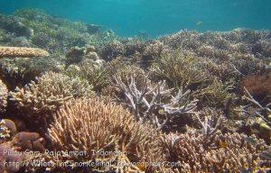 528_Gam-G8_Corals_20141031_IMG_2879.jpg