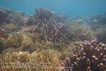 531_Gam-G8_Corals_20141031_IMG_2881.jpg