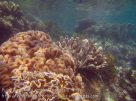 532_Gam-G8_Corals_20141029_IMG_2208.jpg