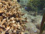 548_Gam-G9f_Pyjama-Cardinalfish_20141031_IMG_2905.jpg