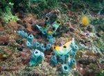564_Gam-G9_Ascidians-Sponges_20141031_IMG_2988.jpg