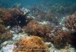 593_Gam-G11_SW-Corner-Corals_20141030_IMG_2442.jpg