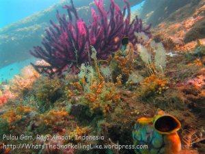 607_Gam-G20_Pssg-Soft-Corals_20141030_IMG_2498.jpg