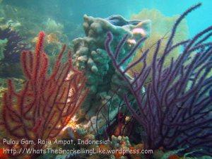 608_Gam-G20_Pssg-Soft-Corals_20141030_IMG_2532.jpg