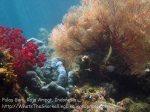 610_Gam-G20_Pssg-Soft-Corals_20141030_IMG_2503.jpg