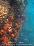 611_Gam-G20_Pssg-Soft-Corals_20141030_IMG_2502.jpg