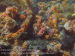 612_Gam-G20_Pssg-Soft-Corals_20141030_IMG_2514.jpg