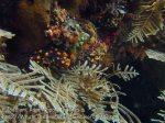 616_Gam-G20_Pssg-Soft-Corals_20141030_IMG_2496.jpg