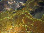 617_Gam-G20_Pssg-Hard-Corals_20141030_IMG_2539.jpg