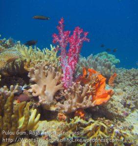626_Gam-G25_MksPt-Soft-Corals_20141030_IMG_2588.jpg