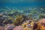 Indo_RA_634_Gam-G30_Near-PE-Corals_20141030_IMG_2627